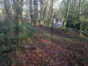 A bank of earth was preventing the woodland from flooding.